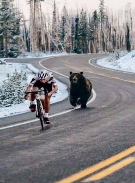 CYCLING WITH BEARS, The Applewood Manor